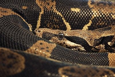 Hypnotherapy NYC for  Fear of Snakes Hypnosis New York